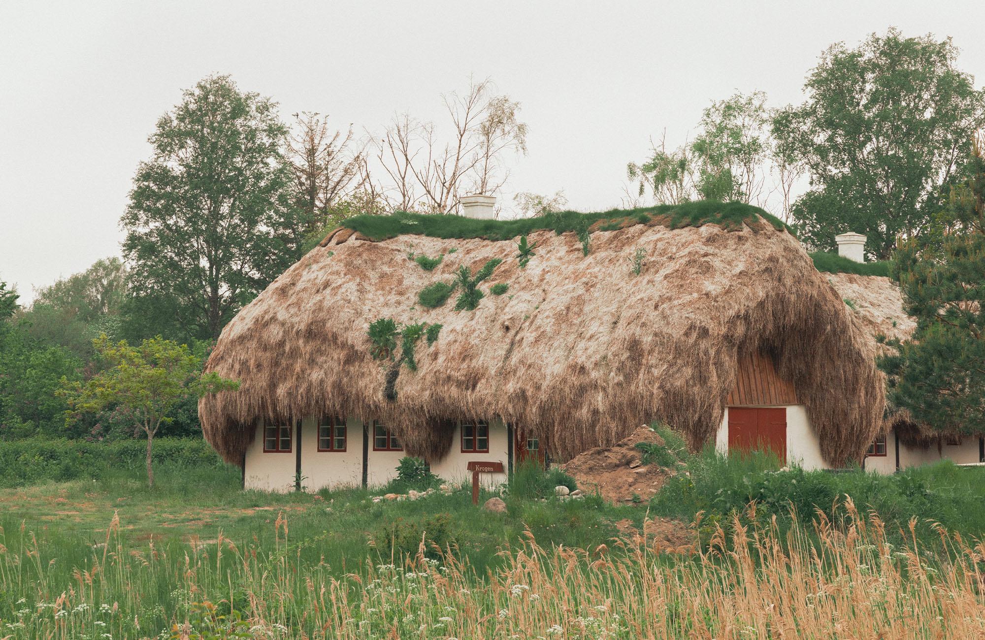 Sould-Nature-Eelgrass-Laeso-2000x1300px-07